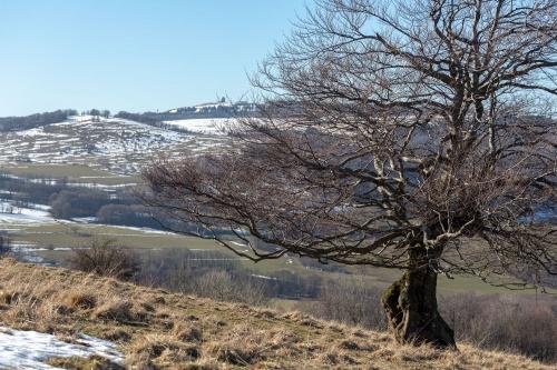 Hutebuche am Steinkopf - Sicht auf Wasserkuppe-2