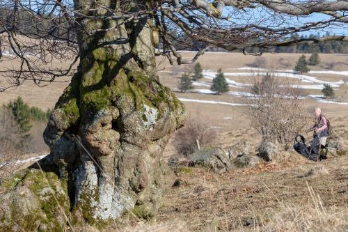 Hutebuche am Steinkopf - am Rundweg 10