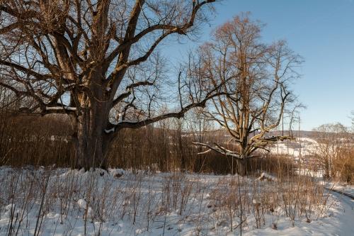 Reste Lindenallee Baum 3 u. 4