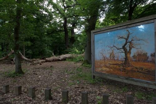 Schwanheimer Wald - Alteichen