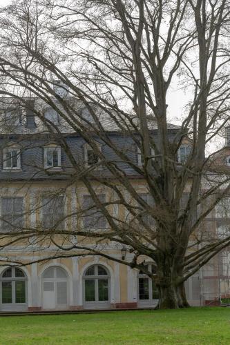Westliche Blutbuche in der Ehemalige Kuranlage Wilhelmsbad-3