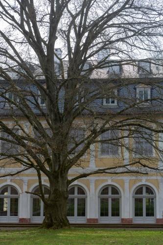 Oestliche Blutbuche in der Ehemalige Kuranlage Wilhelmsbad