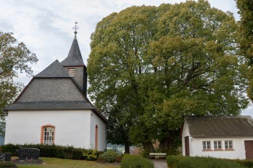 Marklinde Oberlauken - Habitus