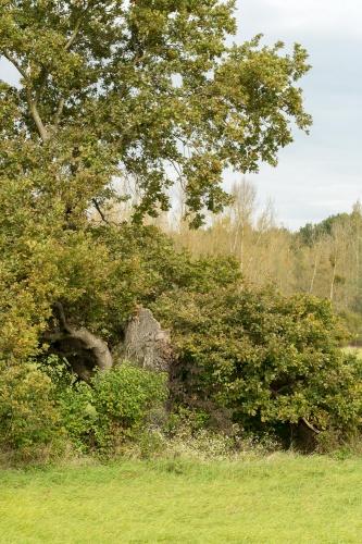 Eiche nahe Koepfchenweiher Sicht von Sueden