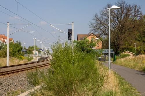 Flatterulme an der S-Bahn in Dudenhofern (Rodgau) †