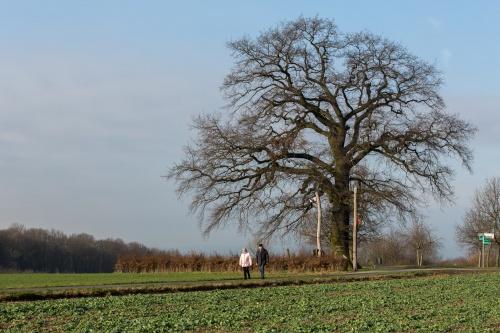 Lausbaum an der Hohen Strasse-5