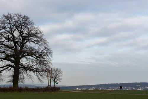 Lausbaum an der Hohen Strasse-6
