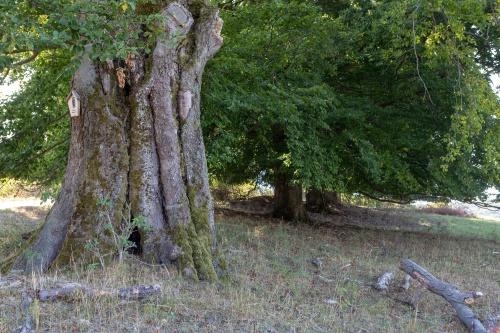 Hutebuchengruppe bei Huempfertshausen-2