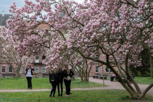 Magnolienhain im Park Schoental-6