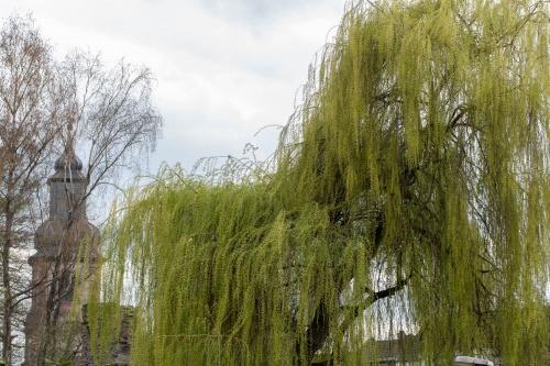 Haengeweide im Park Schoental-2