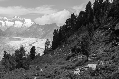 Aletschwald und -gletscher