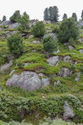 Arve und Fels-3