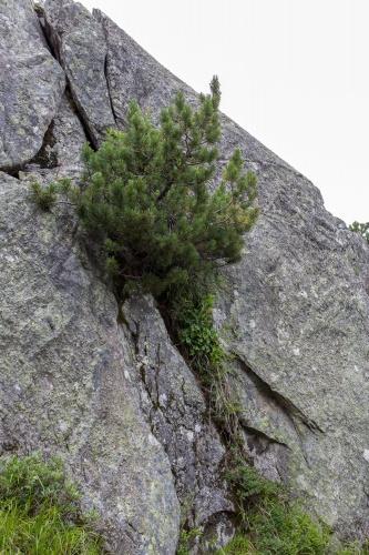 Arve und Fels-4