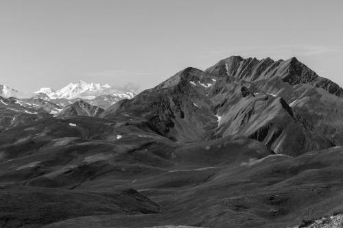 Rinder der Furggerchaeller-Alpe-2