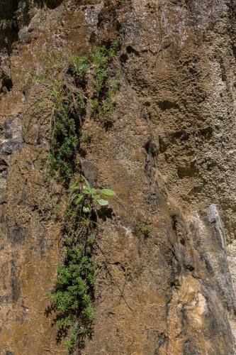 Fels - Wasser - Pflanzen