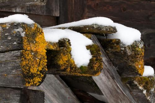 Stadel mit Schnee und Flechte