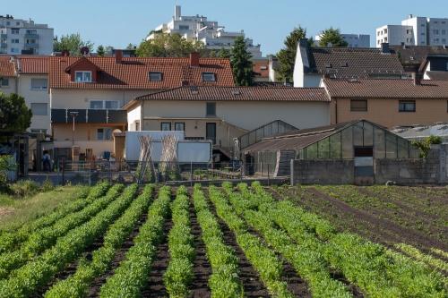 Feld - Garten - Stadt