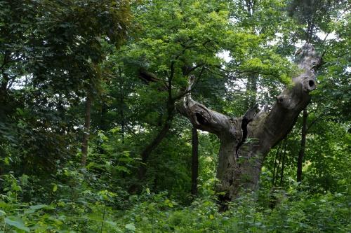 Schwanheimer Wald-3