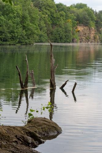 Totholz im Vogelsberger See
