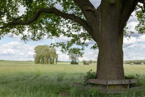 Huteeiche im Wiesengrud-4