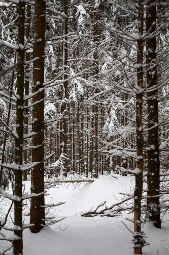 Verzweigt - Verschneit