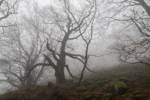 Nebelwald Unterhalb Milseburg