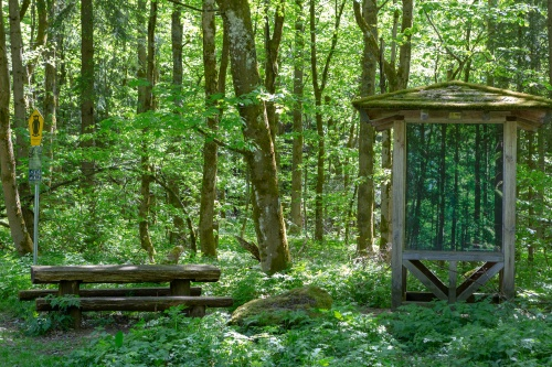 Wald im Wald - Gangolfsberg