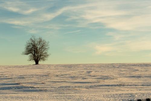 Baum auf Schnee im Himmel