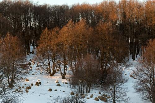 Wald im Abendlicht mit Felsen 2