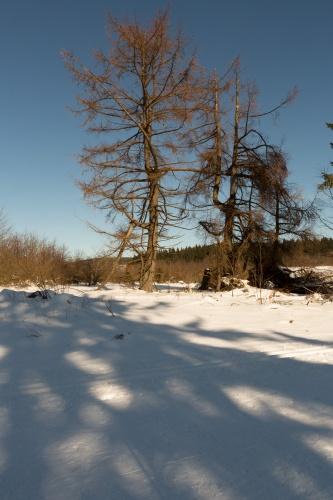 Schornecke - Winterwanderweg-4