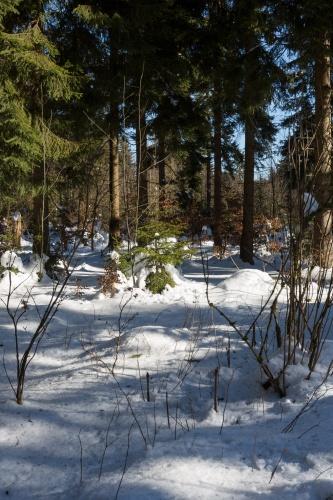 Schornecke - Winterwanderweg