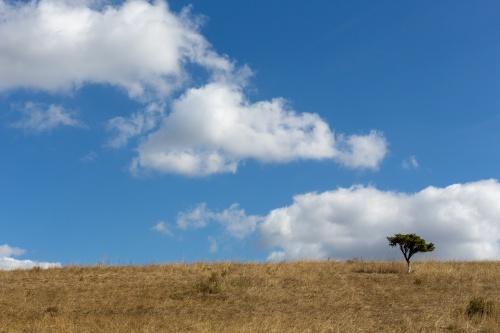 Magerrasen, Holunder und Wolkenstaffel