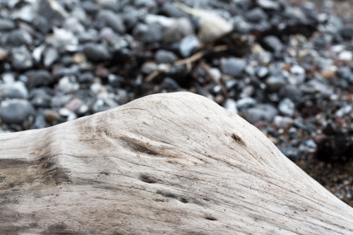 Totholz an der Kreidekueste-21