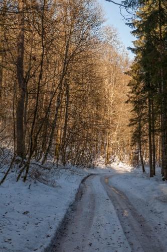Waldweg bei Heuhof