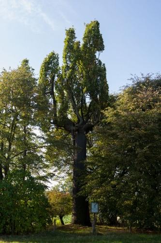 Harreshausen-2