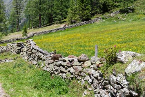 Mauern mit Gelb