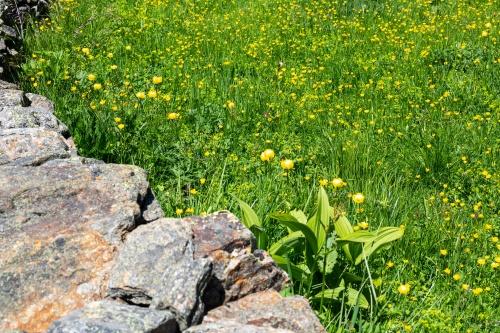 Troll- und andere Blumen