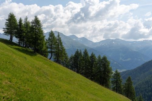 Laerchen-Landschaft